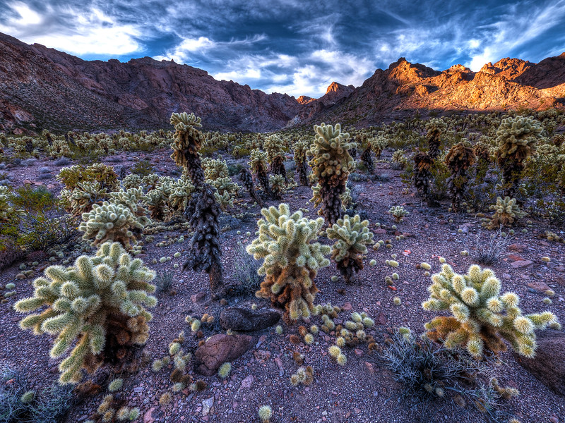 Jumping Cholla Mine Field by Gary Orona