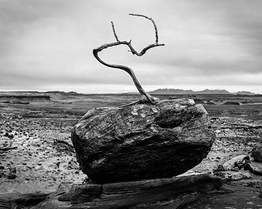 The Sublime Branch of Dinosaur Point