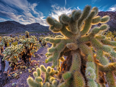 Jumping Cholla Forest by Gary Orona