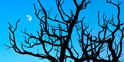 Moon Tree #2