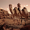 Bill and Clyde We Are Camels