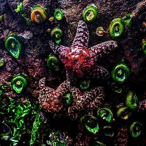 Sea Floor Friends