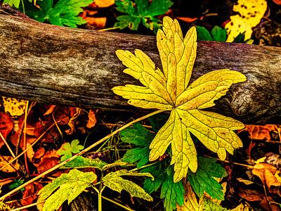Nature's Textures
