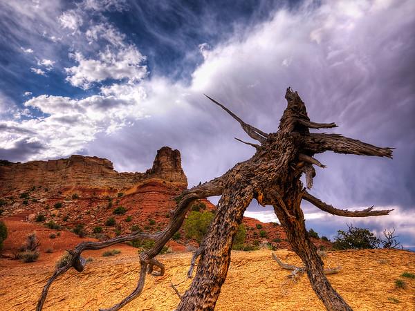 Skeleton of Predator Tree
