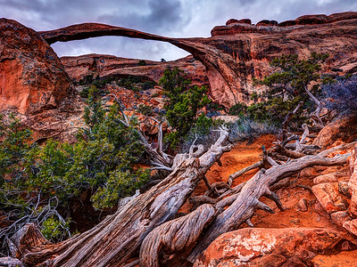 Cacophony at Landscape Arch