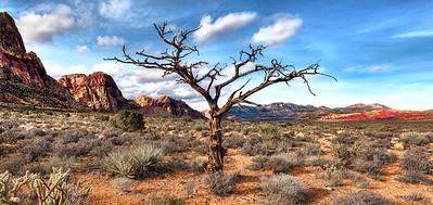 Wild Burro Tree