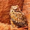 Owl Territory #2