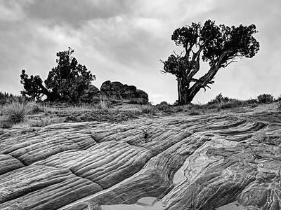 Bent Tree Over Arroyo