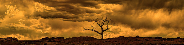 Tempest Over the Hanging Tree