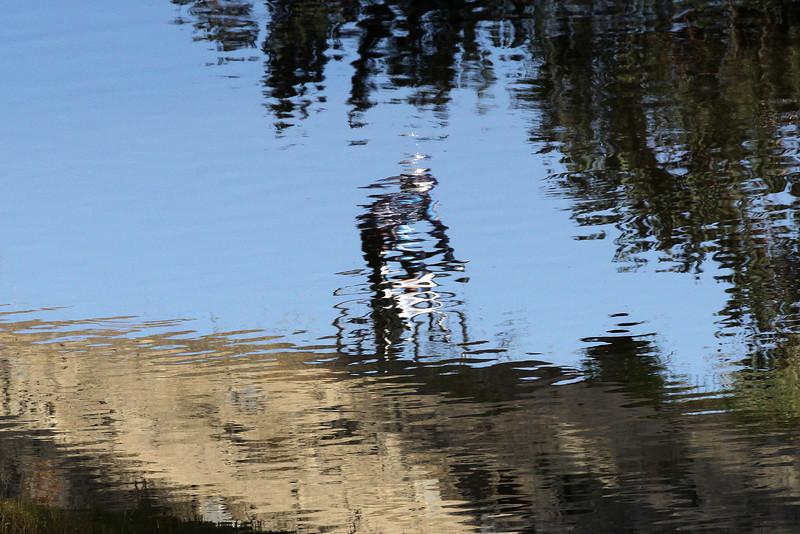 Bike rider along Rose Creek path, near Garnet Street.  Reflection in water of Rose Creek.