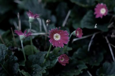Balboa Park Flowers