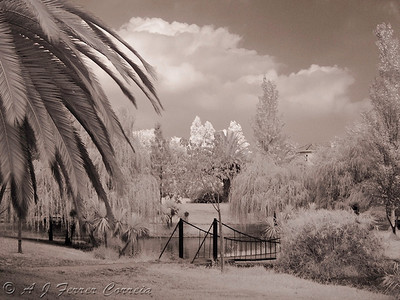 Infra-Red Photography