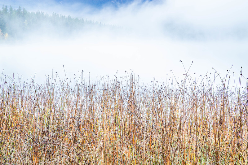 Reeds and Fog - Patricia Lake - Alberta, Canada