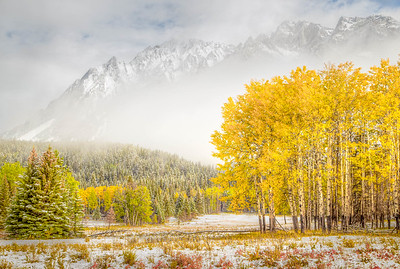 Snowy Mountain and Aspens - Alberta, Canada