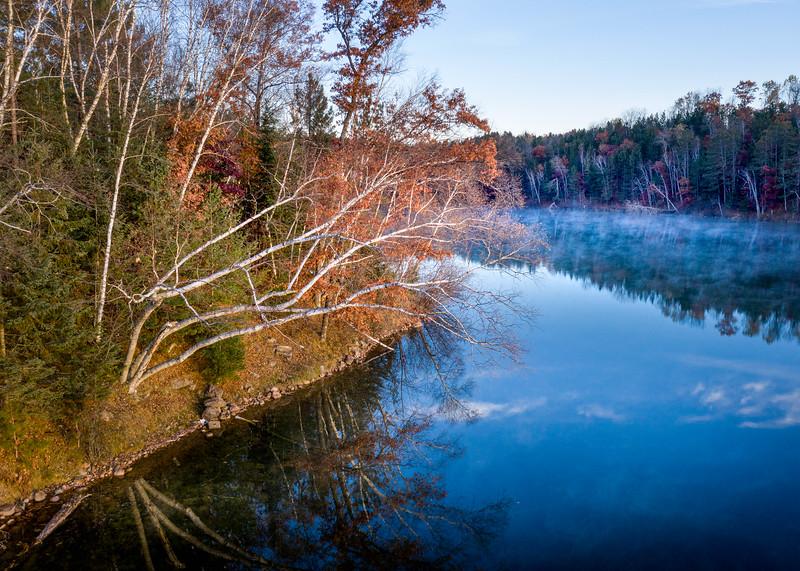 Birch on Boot Lake
