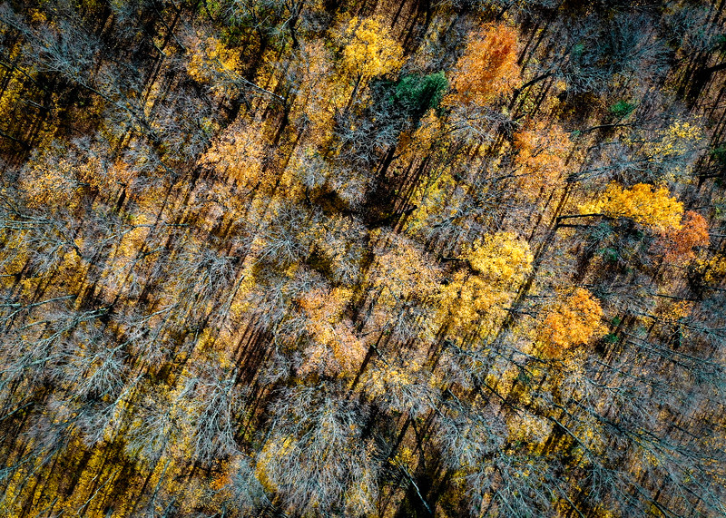 Aerial Tree Pattern with Shadows