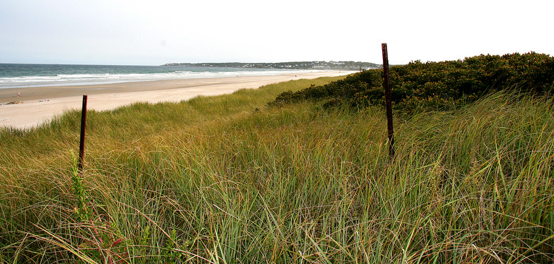 ogunquit beach grass