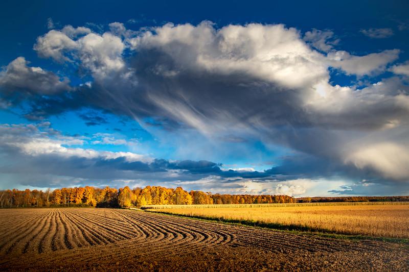 Autumn Verga