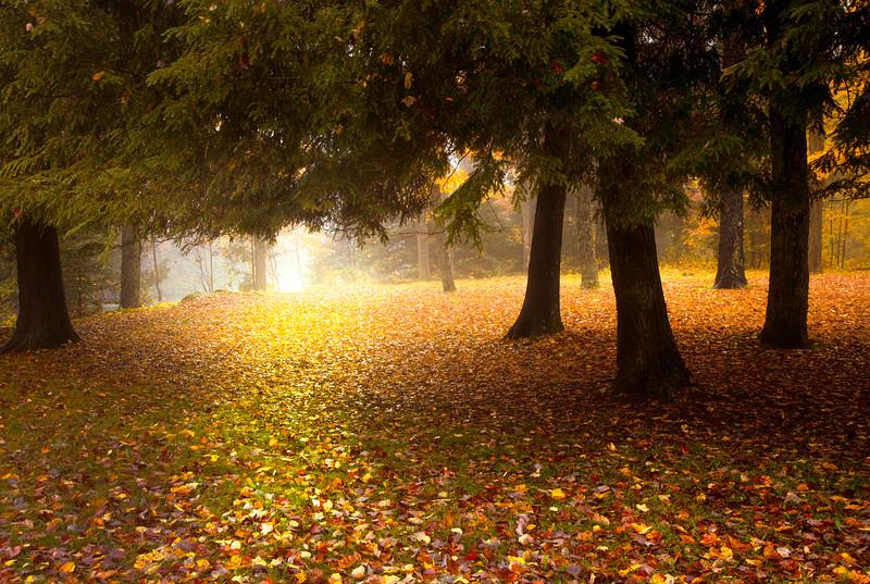 Cedar Path