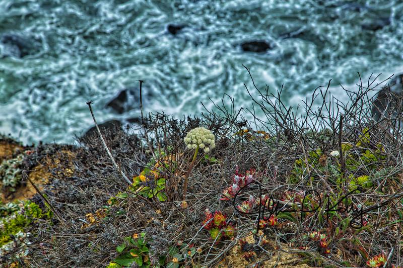 Seaside Foliage