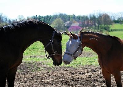 Horses - Kentucky Equine Humane Center