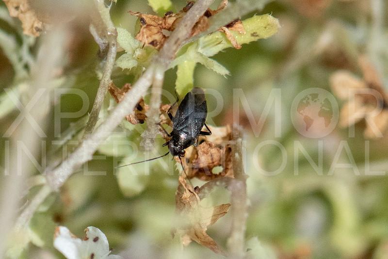 Plant Bug - Need ID