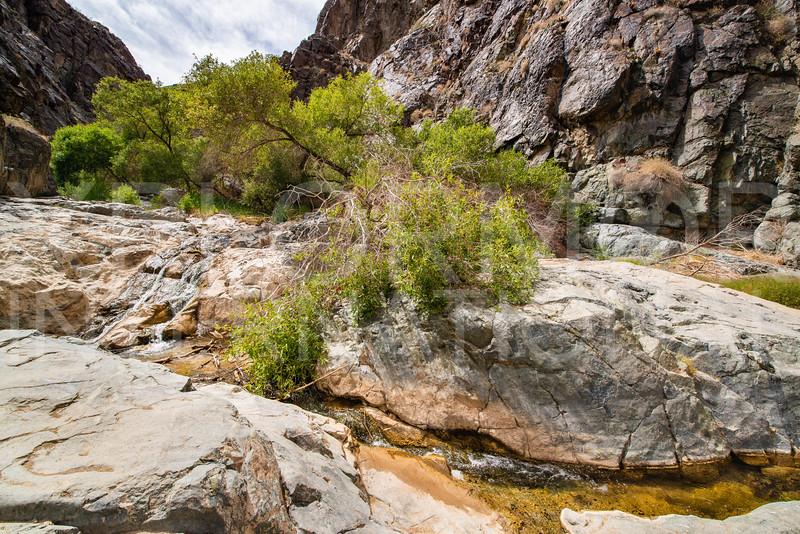 Darwin Falls Trail