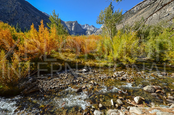 Fall Colors in Inyo National Forest