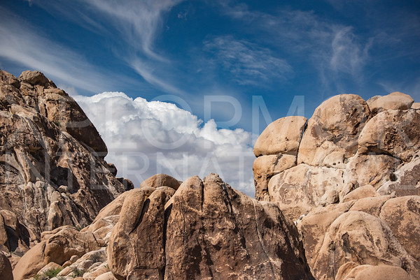 Joshua Tree Monzogranite II