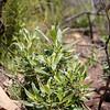 Plant - Need ID