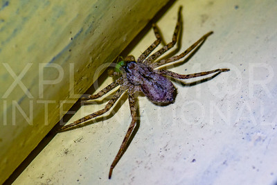 Spider Eating Insect