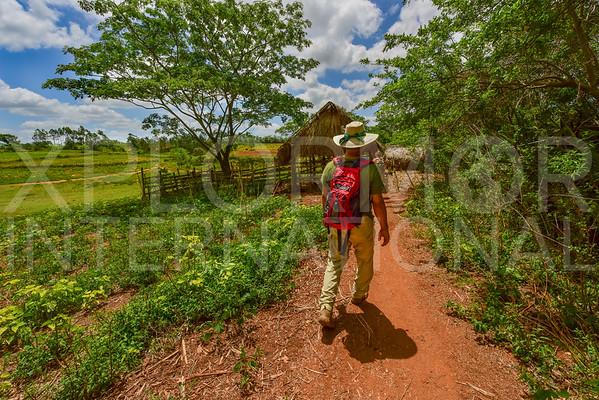 Passing through the Farm