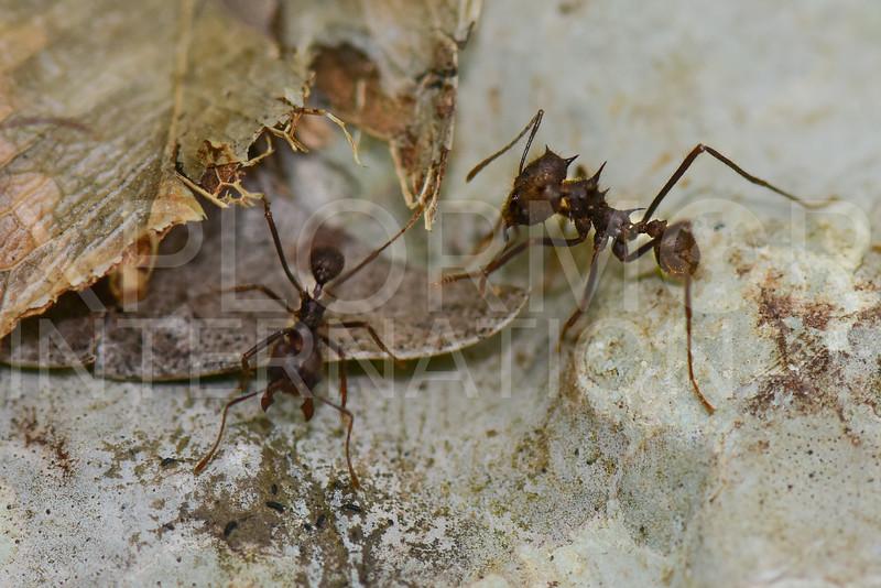 Ants - Need ID