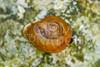 Snail, Unidentified III