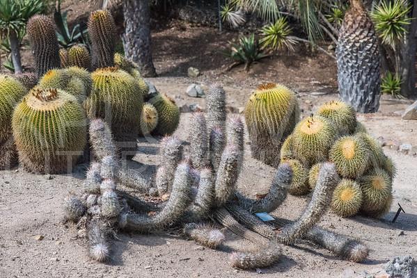 Wrigley Cactus Garden I