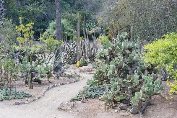 Wrigley Cactus Garden III