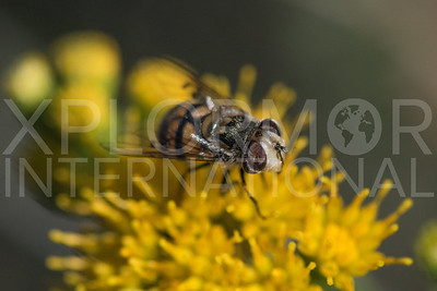 Bromeliad Fly II