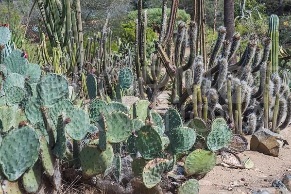Wrigley Cactus Garden