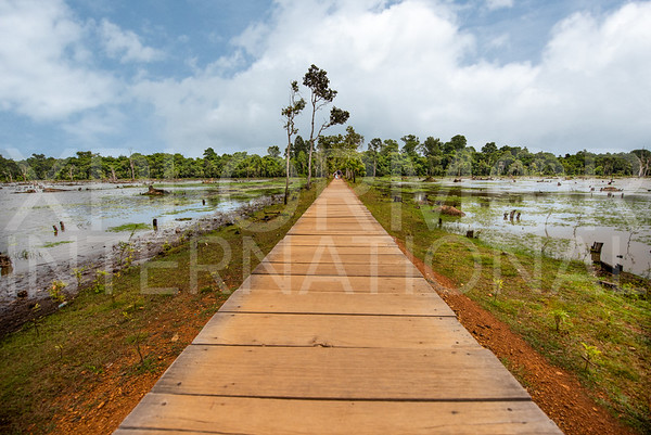Wooden Boardwalk to the North Entrance at Neak Poan