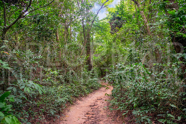 Trail to Baray of Preah Khan