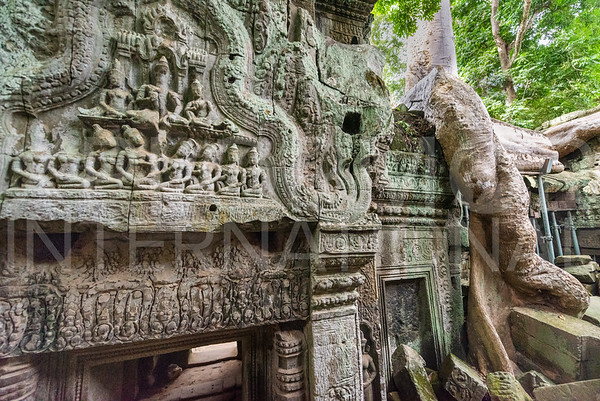 Stone Carvings at Ta Prohm Temple