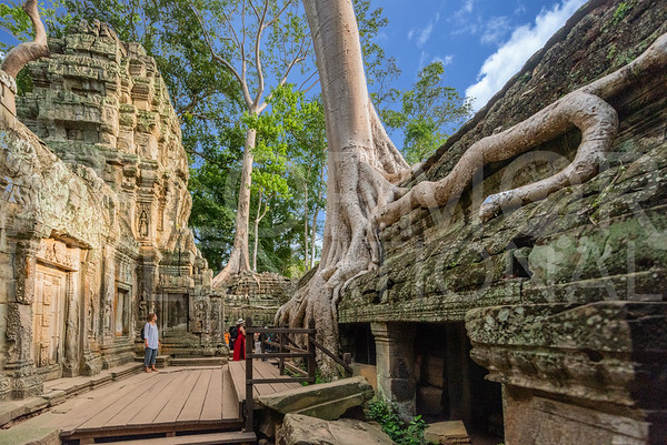 Strangler Fig Tree in the Inner Courtyard at Ta Prohm Temple