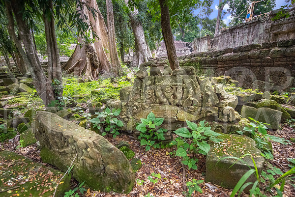 Ancient Carvings of Ta Prohm Temple