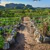 Finca Agroecológica El Paraiso VII