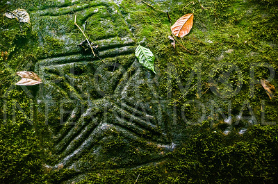Mysterious Monkey Stone