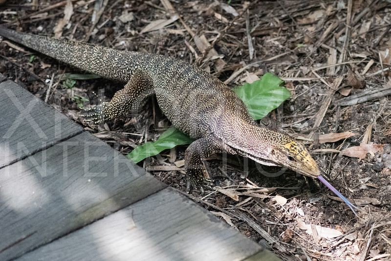 Clouded Monitor