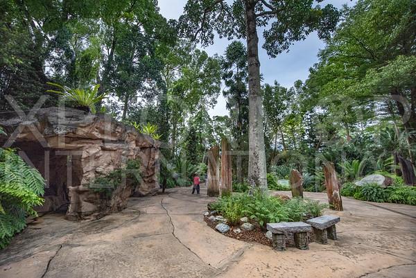 Trees of Stone