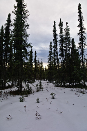Along the Compeau Trail