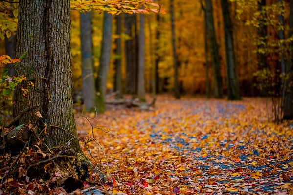 Leafy Path
