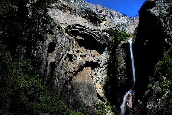 Yosemite Sequoia 2007